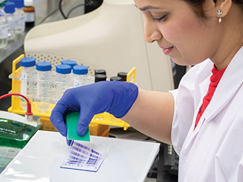Gene expression studies, at R&D Centre, Thane.